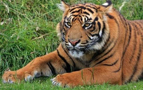 Tragedie la o gradina zoologica din Marea Britanie!